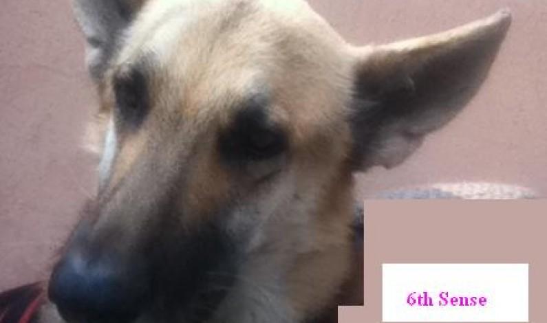 Dog's Sixth Sense