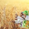 Baisakhi/Vaisakhi: Importance and Significance
