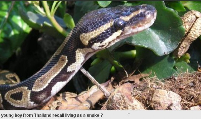 Snake In A Past Life: 3 Years Kid