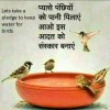 Keep Water For The Birds In Summers