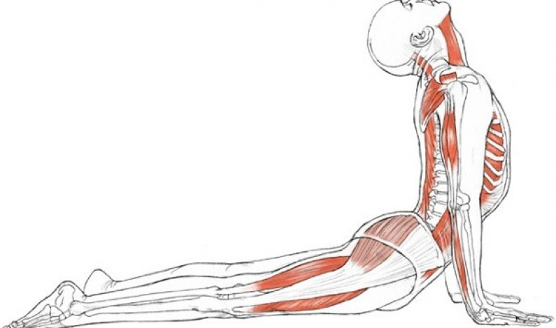 Yoga For Slipped Disc Problem