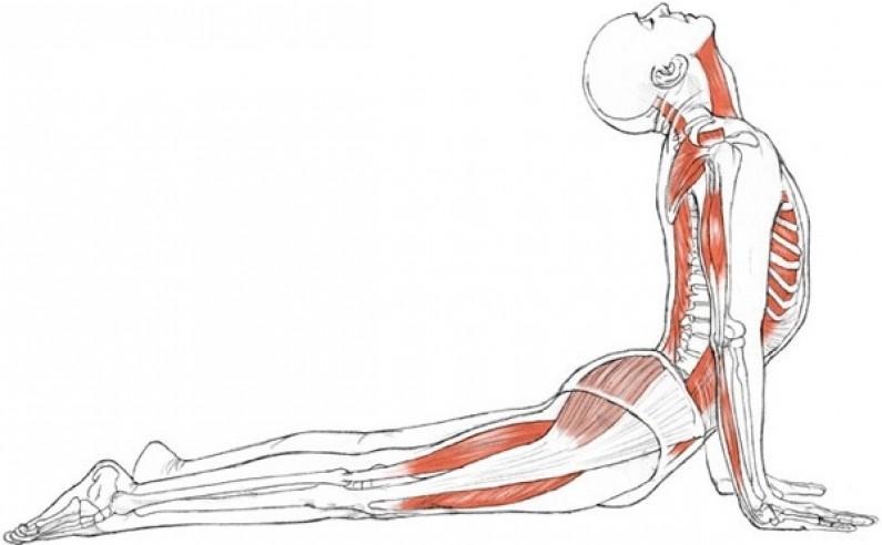 Yoga For Slipped Disc Problem